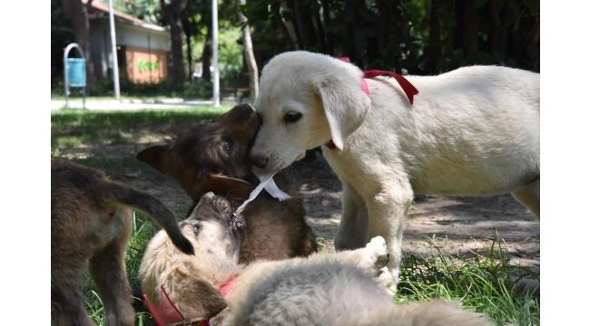 Bornova Sokak Hayvanlarının da Evi