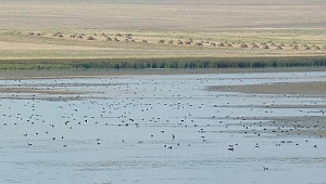 Türkiye'nin Sözleşme Gereği Koruma Altına Aldığı Kuyucuk Gölü Kuruyor