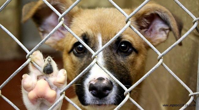 Hayvana Şiddet Uygulayana 'Hapis Cezası' Önerisi
