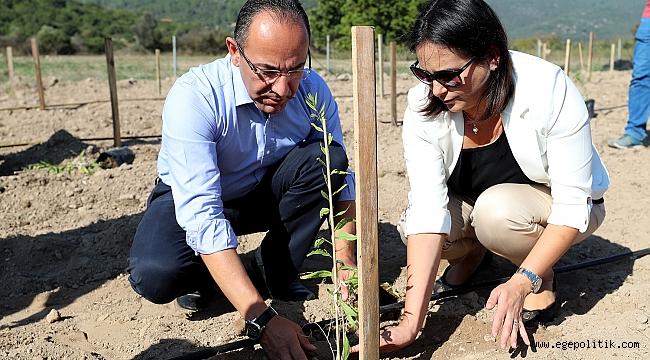 Urla'da 'Goji Berry' Üretimi Artıyor