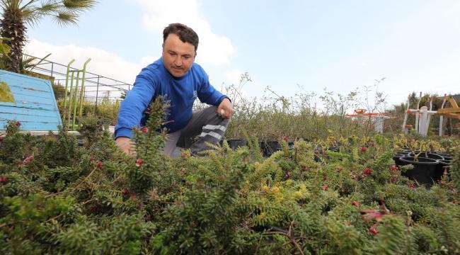 Gaziemir Belediyesi'nden su kaynaklarını korumak için çalı üretimi!