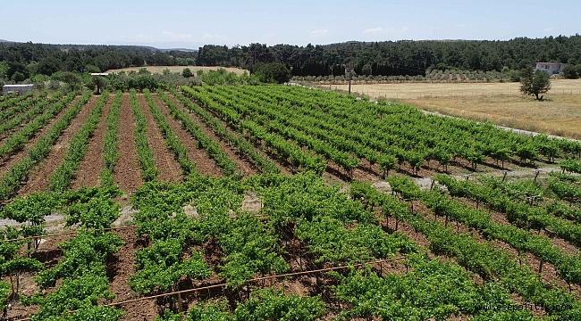 Buca'nın tüm arazileri tarımsal üretime açılıyor