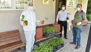 Çiğli Belediyesi'nden vatandaşa sebze fidesi