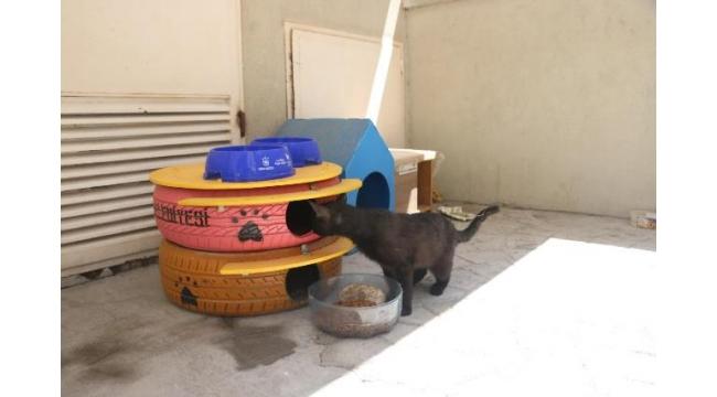 Konak'taki sokak kedilerinin başlarını sokacak yuvaları var